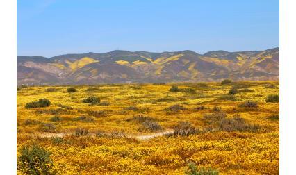 Долината Каризо, Калифорния, САЩ