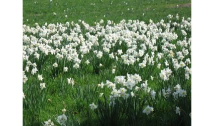 Карлсруе - цветя