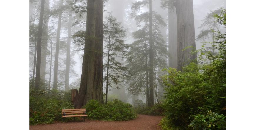 Гигантските секвои на Калифорния